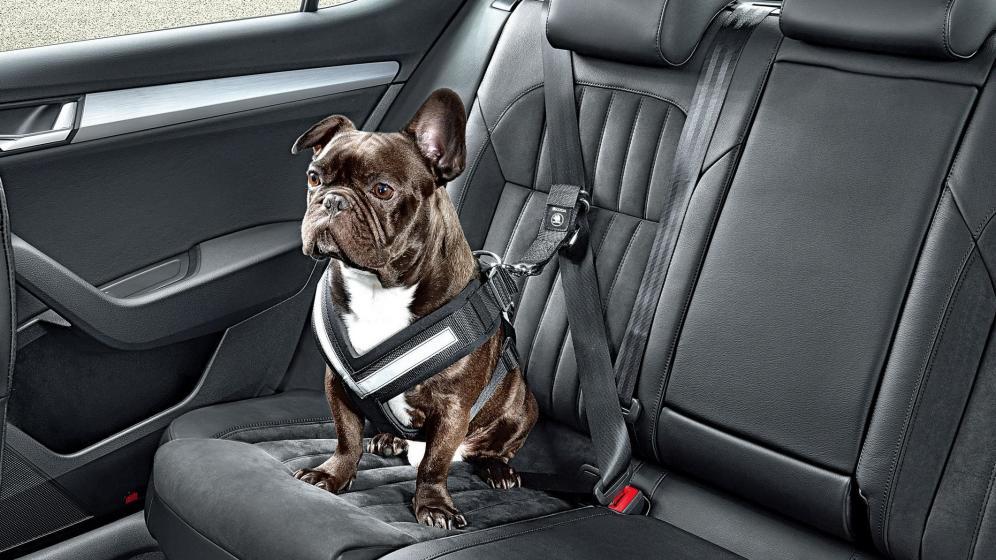 Set-sistemes-de-retenci-de-menys-a-ms-segurs-per-dur-a-la-teva-mascota-al-cotxe